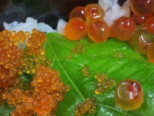 Japanese Food - Japanese FIsh Eggs