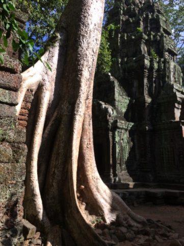 Angkor Wat Temple and Siem Reap-5028