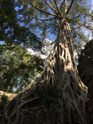 Angkor Wat Temple and Siem Reap-5035