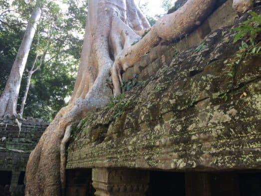Angkor Wat Temple and Siem Reap-5036