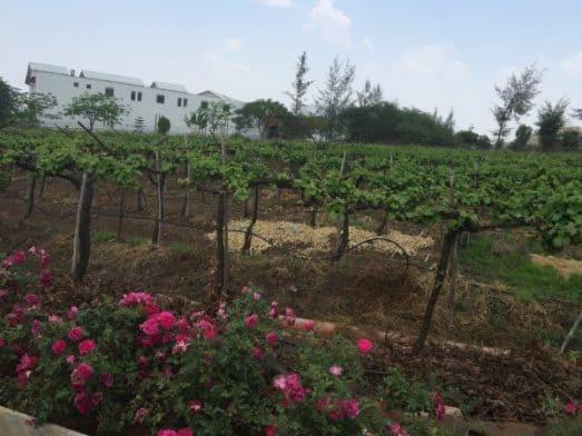 Wine-Tasting-India-3