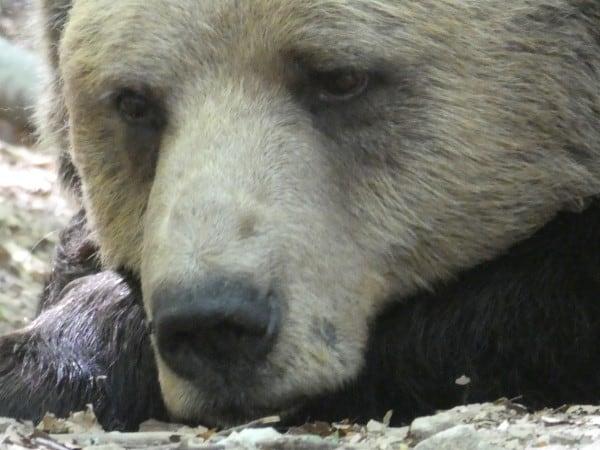 Dancing Bears Park (17)