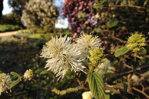 beth chatto gardens colchester