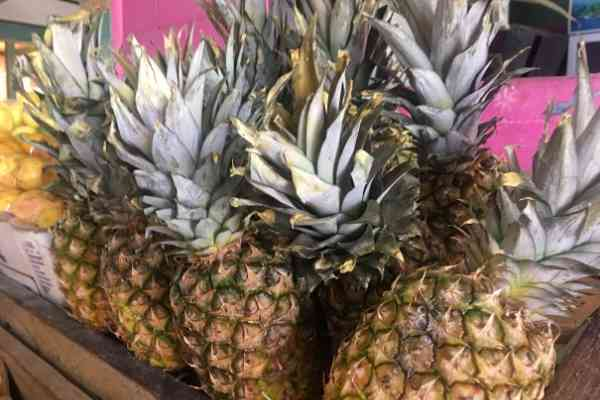Antigua Pineapples